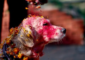 A police officer sprinkles colored powder onto a police dog at Nepal's Central Police Dog Training School as part of the Diwali festival, also known as Tihar Festival