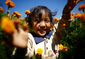 A child plays in a field as her mother (unseen) picks marigold flowers which will be used to make garlands that are offered during prayers for the Tihar festival, also called Diwali