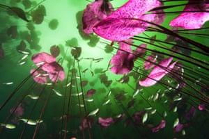 2014 WPY Plants and Fungi category winner Glimpse of the underworld Christian Vizl  Mexico
