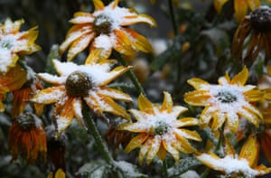 Oberjoch, Germany Early winter snow covers flowers as stormy winds brought cold air and snow to Bavaria at higher elevations