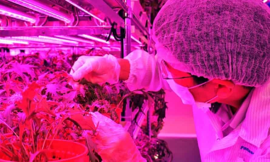 Panasonic indoor vegetable farm