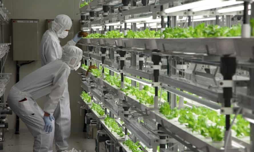 Fujitsu indoor farm.