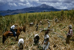 Sugar-cane cutters in a field near Le Carbet, Martinique 1959