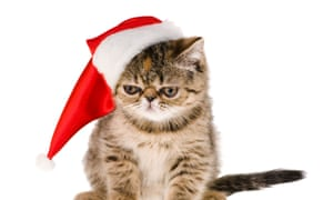 23a931cecb Pets at Home Christmas range bids to show pets are not just for ...