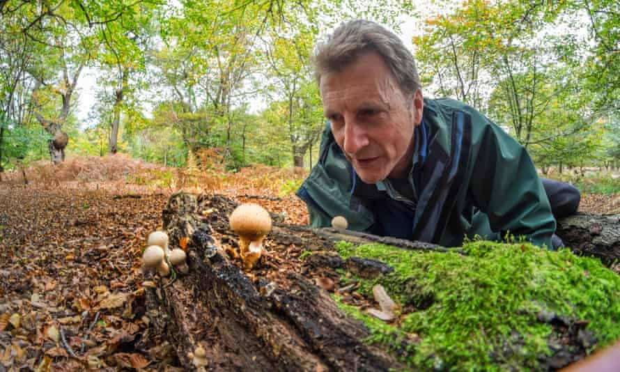Fungus in Epping Forest : Dr Jeremy Dagley, head of conservation with some Puff Balls.