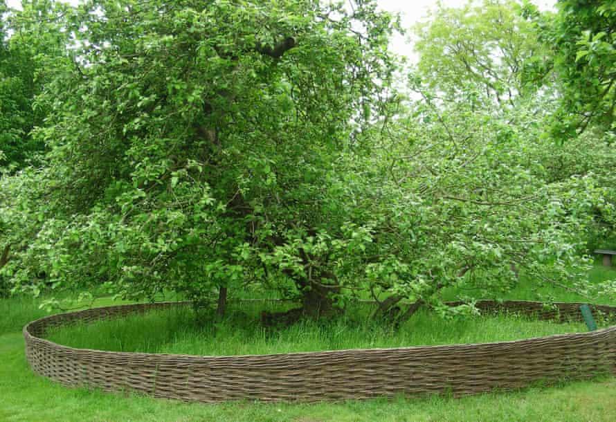 Woodland Trust top 10 trees : Newton's Apple Tree