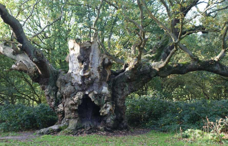 Woodland Trust top 10 trees Old Knobbley