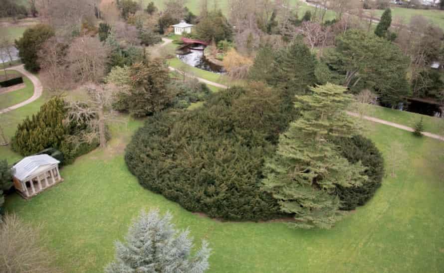 Woodland Trust top 10 trees : Shugborough Yew.