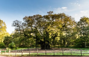 Woodland Trust top 10 trees : Major Oak. Nottinghamshire County Council