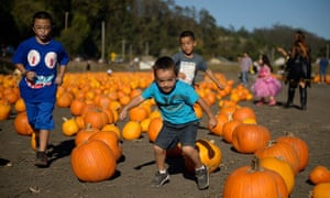 Boys run through a  pumpkin patch in Half Moon Bay.