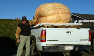 Giant pumpkin in a truck