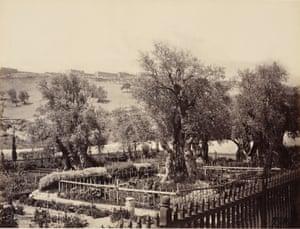 Cairo to Constantinople: Garden of Gethsemane, Jerusalem