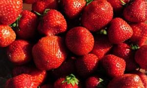 Mono munchers enjoy just strawberries.