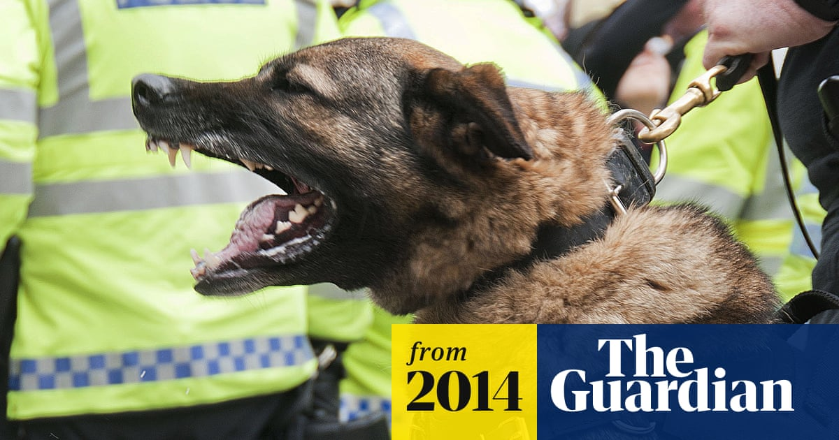 More than five people a week are bitten by police dogs