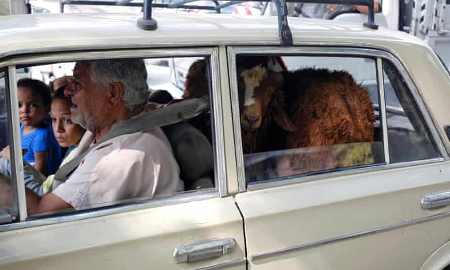 A family in Cairo transports a sheep in the back of a car. Poorer families save for months in order to be able to afford meat for Eid-al-Adha.