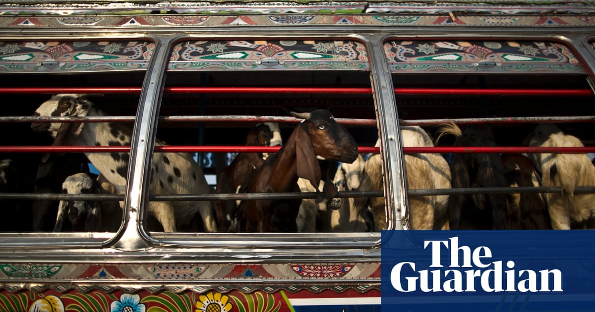 Eid al-Adha sacrificial animals – in pictures | World news | The