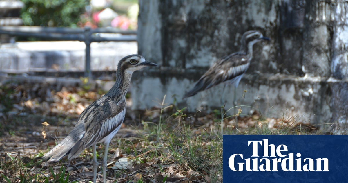 Meet the birds of Cairns, in the 'burbs and the bush | Travel | The