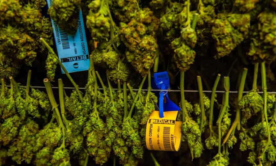 Medicine Man Denver is the single largest legal medical and recreational marijuana dispensary in Denver, Colorado.
