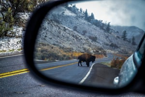 Bison in Yellowstone park, Wyoming