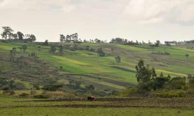 Regreening Ethiopia