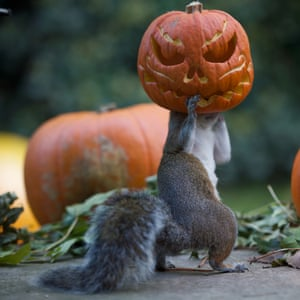 These squirrels are going nuts for Halloween in Teddington, UK