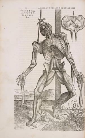 Engraving from Andreas Vesalius's greatest work 'De Humani Corporis Fabrica.'