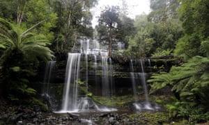 Russell Falls, Tasmanian forest