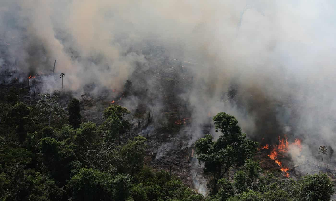 Amazon rainforest losing ability to regulate climate, scientist warns