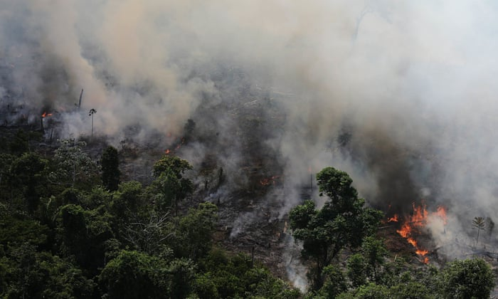 Amazon rainforest losing ability to regulate climate
