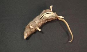 Dead rat drop at the CIA museum