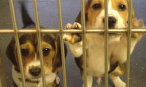 Puppies at an animal research centre