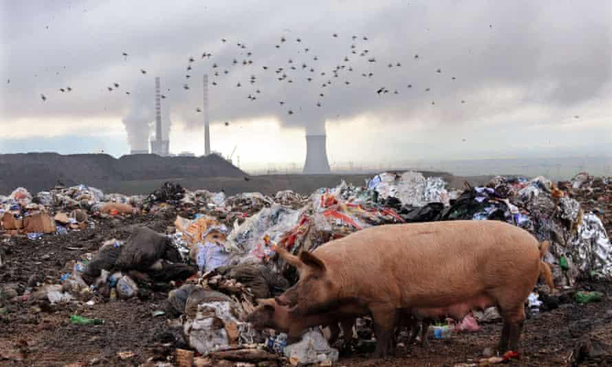 pigs dump energy pollution