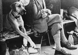 A Great Dane at the Manchester Dog Show of 1966 mirroring the cross-legged pose of the gentleman in plus fours in the next bay.