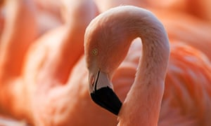 Two flamingos dead after bungled Mississippi fraternity prank | US