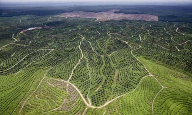 Palm oil plantation, Riau, Indonesia