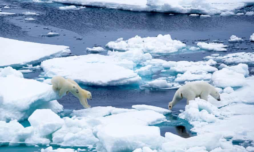 A mother polar bear and her two cubs traverse the ice in Nunavut, Canada, September 2014.