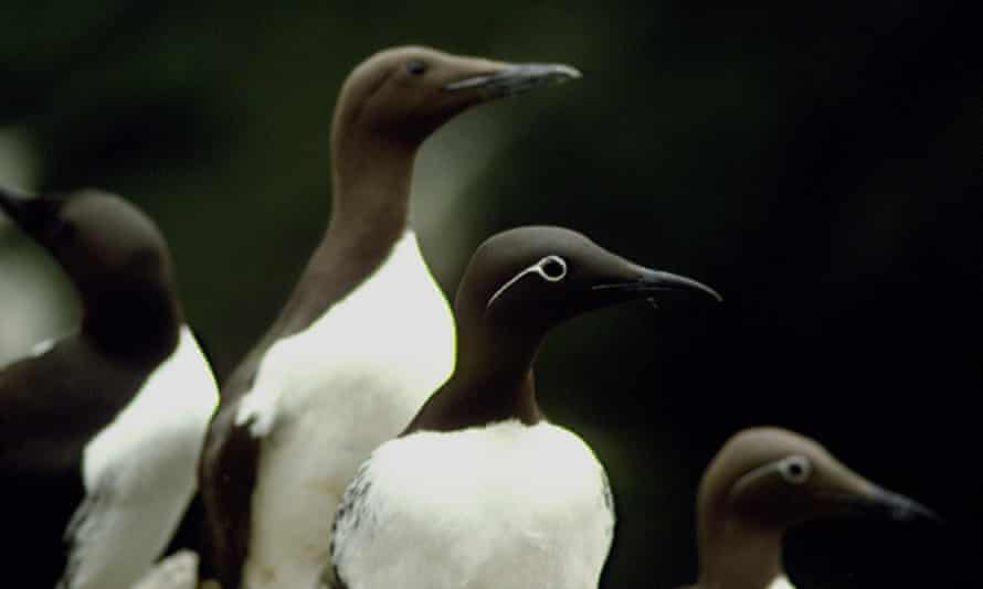 Crowd-funding secures long-term seabird study for another year