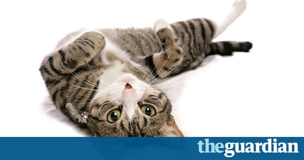 Wild Cats Were Tamed With Strokes And Treats Genetic Analysis - 18 hilarious sad cat problems that might explain why your cats so moody