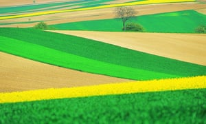 European countries look like they will be able to enact national bans on the growing of GM crops