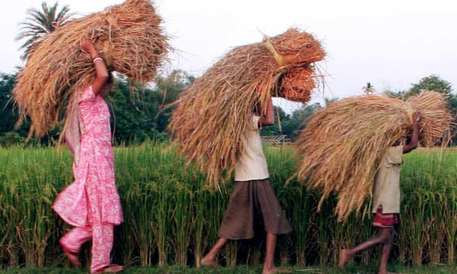 Indian farming family