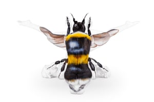 Three contortionists and make-up artist Emma Fay pair up to create amazing bumble bee