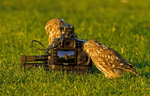 Two little owls take pictures of themselves using a camera linked to a pressure pad, at the Stow Maries Aerodrome, Essex.