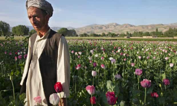 Afghan poppy farmer