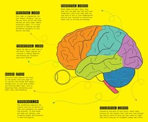 Eye benders brain