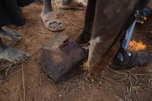 A Pokot girl bleeds onto a rock after being circumcised