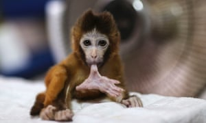 """Charlotte suddenly became the most popular choice' for the new baby macaque, said a zoo official"