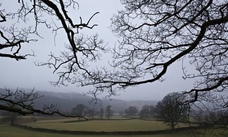 bare trees in winter