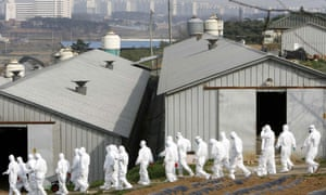 South Korean quarantine officials at a poultry farm where a suspected bird flu case was reported in April.