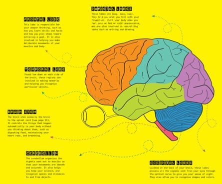 Some key parts of the brain