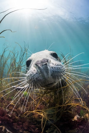 Runner-up:  Dan Bolt – Grey seal – Lundy Island - Olympus E-PL5 Dan lives in south Devon where he is a web developer. He has been shooting underwater images for 14 years.  Dan's image of a grey seal was shot while snorkelling around Lundy Island.